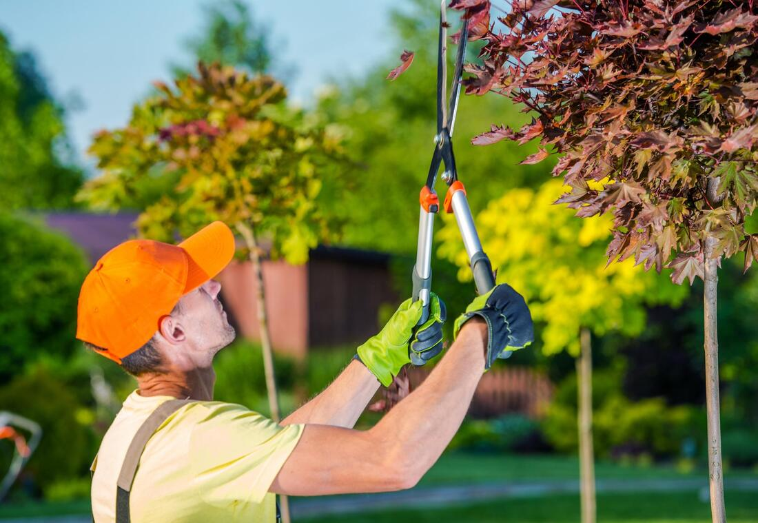 tree trimming and tree pruning experts