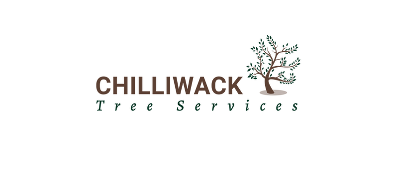 Chilliwack Tree Services